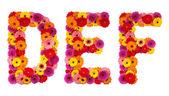 Letter D E F - flower alphabet isolated on white — Stock Photo