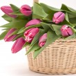 Basket full of tulip — Stock Photo