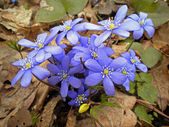 The first spring flowers-glades — Stock Photo