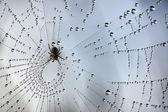 Dew in a spiderweb 3 — Stock Photo