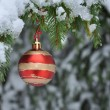 Christmas ball, christmas tree — Stock fotografie