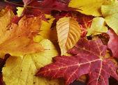 Falling autumn leaves — Foto Stock
