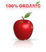 Organic apple — Stock Vector