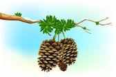 Dry Pine — Stock Vector