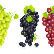 Bunch of Grapes — Vector de stock