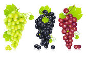 Bunch of Grapes — Stock Vector