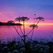 Wild grass at sunset — Stock Photo