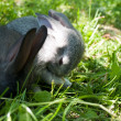 Stock Photo: Little mammal rabbits