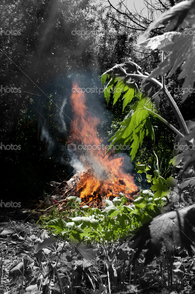 Fire in the forest, danger in the environment  — Foto Stock #6822140