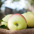 Organic apples in the garden — Stock Photo