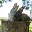 Mammal rabbits on a stump — Stock Photo
