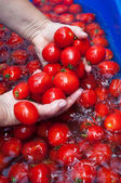 Woman wash tomatoes — Stock Photo
