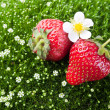 Fresh strawberry and flowers — Stock Photo