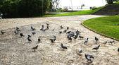 Голуби в montjuïc's — Стоковое фото