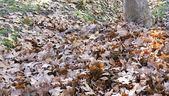 Dry leaves. — Stock fotografie