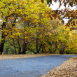 Forest in autumn - Stockfoto