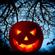 Halloween pumpkin background — Stock Photo