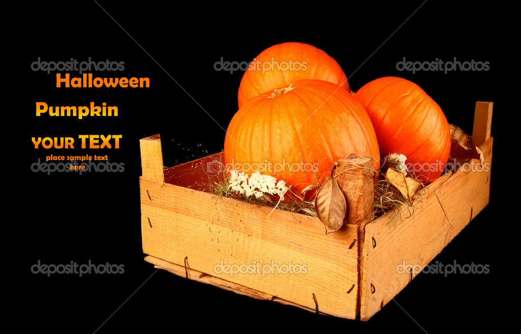 Halloween decoration with pumpkins isolated on black  Stock Photo #6819360