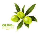 Rama de olivas verdes frescas — Foto de Stock
