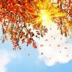 Beautiful autumn tree leaves background border — Stock Photo