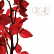 bordure orchidée rouge — Photo