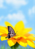 Monarch butterfly on yellow flower — Stock Photo