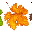 Three different autumn leaves — Stock Photo