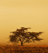 Lonely tree in the mist — Stock Photo