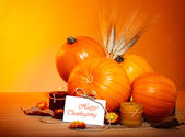 Thanksgiving holiday decoration — Stok fotoğraf