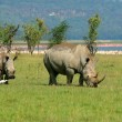 Rhinoceros in the wild — Stock Photo #7151165