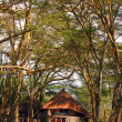 Stock Photo: Tourist resort in woods of Africa