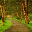 Forest pathway — Stock Photo #7151708