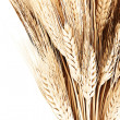 Stock Photo: Wheat bouquet