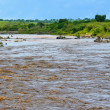 Stock Photo: Mara River