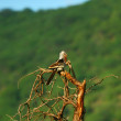 Bird on the branch — Stock Photo