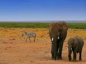 Elefantes en la naturaleza — Foto de Stock