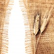 Wheat border — Stock Photo