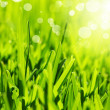 Fresh green grass abstract background — Stock Photo