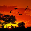 Landscape of Africa with warm sunset - Stock Photo