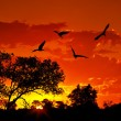 Stock Photo: Landscape of Africwith warm sunset