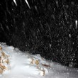 Night snowfall — Stock Photo
