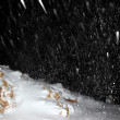 Night snowfall — Stock Photo #7790562