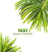 Beautiful green fir border — Stock Photo