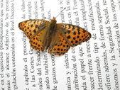 Mały motyl pomarańczowy i srebrny na książkę z wyciągniętymi — Zdjęcie stockowe