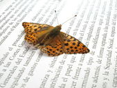 A small orange and silver butterfly on a newspaper with outstret — Stock Photo