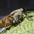 Horsefly landed on a leaf - Stock Photo