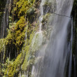 Cascades between the vegetation - Stock Photo