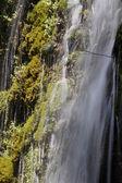 каскады между растительность — Стоковое фото