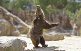 Great happy dancing bear — Stock Photo
