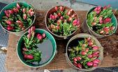 Tulipany wiadra na rynku rolników — Zdjęcie stockowe